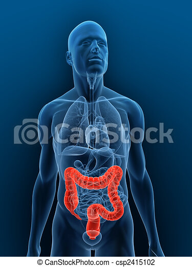 highlighted colon - csp2415102