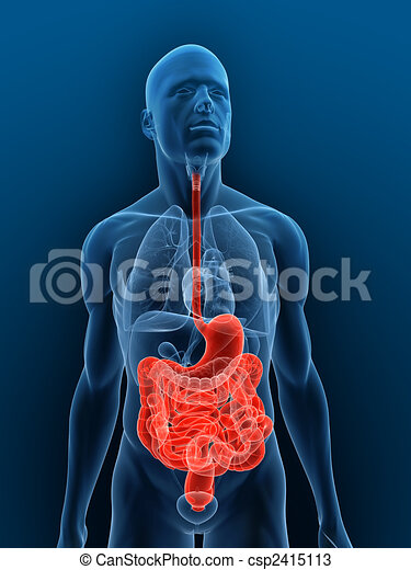 highlighted digestive system - csp2415113