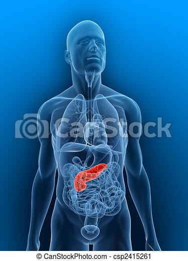 pancreas - csp2415261