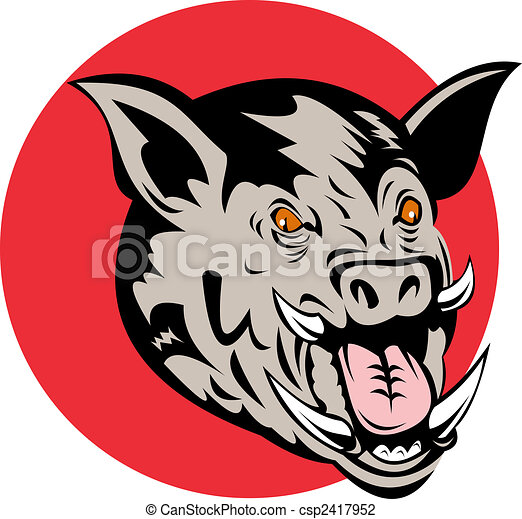Wild pig's head front on - csp2417952