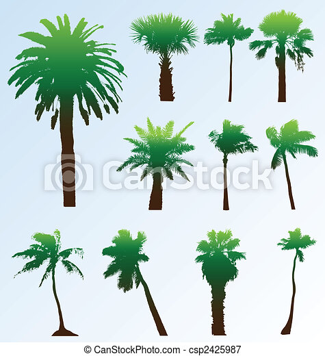Collection of vector palm trees silhouettes. Easy to edit, any size. - csp2425987