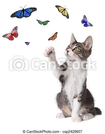 Kitten Batting at Butterflies - csp2429607
