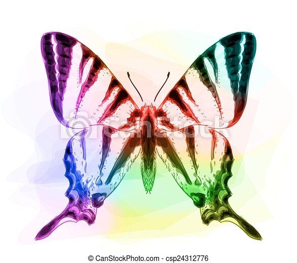 Butterfly. Iridescen colours.  - csp24312776