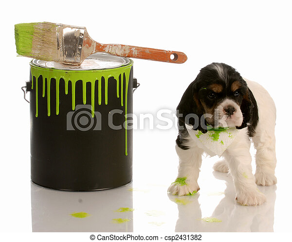 naughty puppy - cocker spaniel puppy with paint can and brush - csp2431382