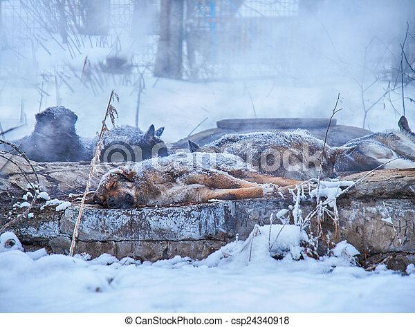 Archivi fotografici di inverno senzatetto cani - Animali in inverno clipart ...