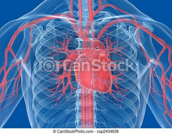 human heart - csp2434636