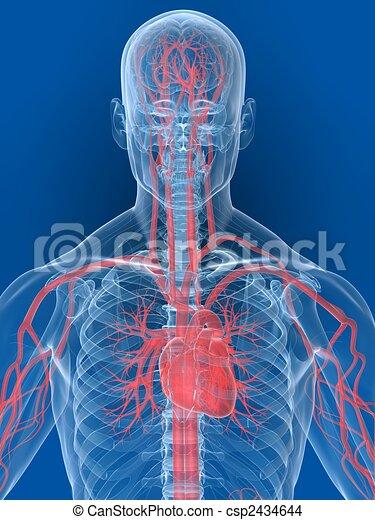 Dessin de coeur humain 3d rendu illustration de a - Dessin coeur humain ...
