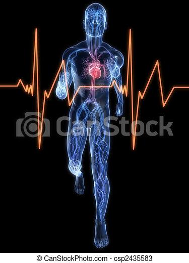 jogger - vascular system - csp2435583
