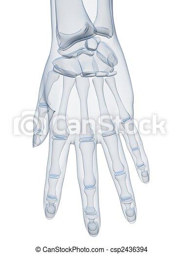 x-ray hand - csp2436394
