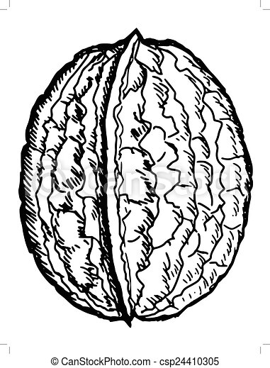 vector clipart of walnut hand drawn  sketch illustration free tree outline clip art apple tree outline clip art