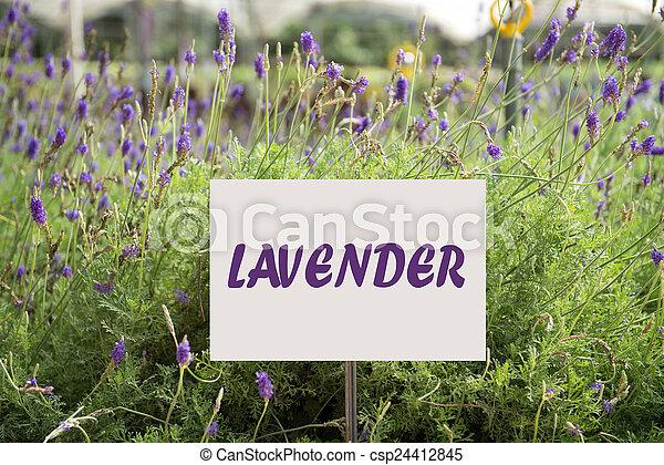 stock foto von lavendel pflanze schlie en auf. Black Bedroom Furniture Sets. Home Design Ideas