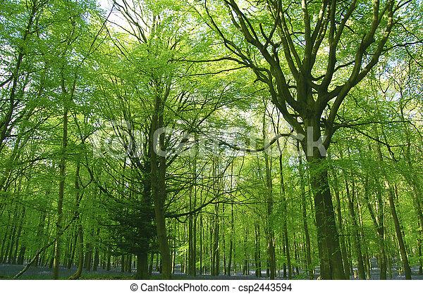 Scenic woodland - csp2443594