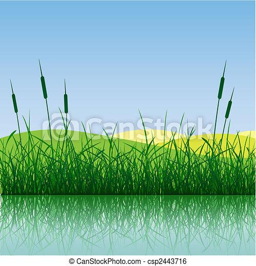 有关草, 芦苇, 反映, 水csp2443716剪贴艺术矢量文件