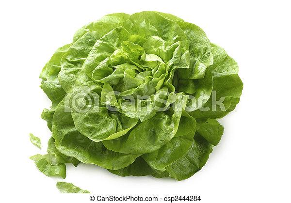 Butterhead lettuce - csp2444284
