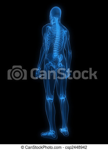 x-ray human skeleton - csp2448942