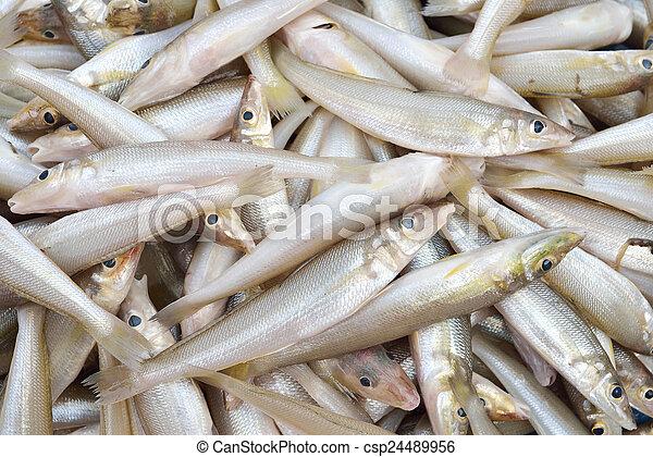 pez, smelts - csp24489956
