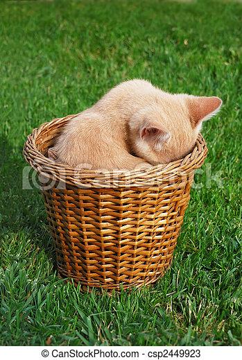 Shy kitten - csp2449923