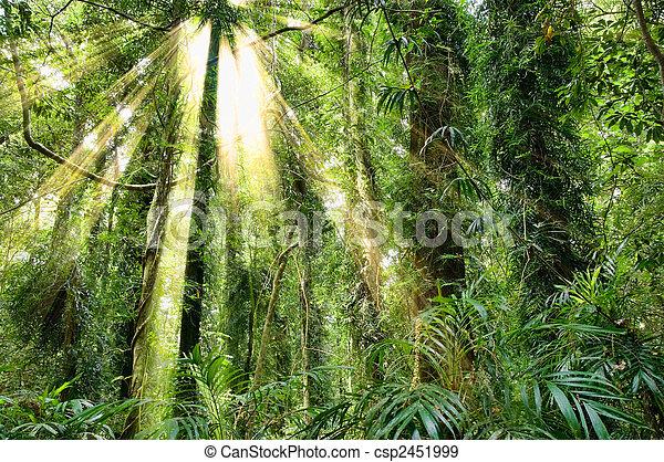 sunlight in dorrigo world heritage rainforest - csp2451999