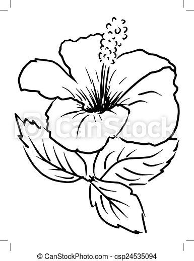 Eps vektoren von hibiskus skizze karikatur abbildung von hibiskus csp24535094 suchen sie - Dessin hibiscus ...
