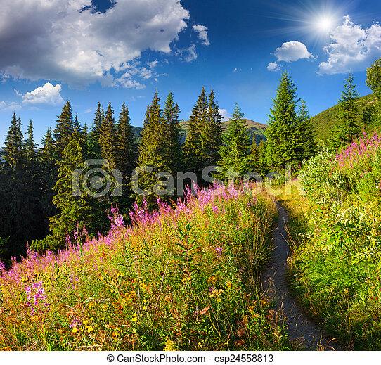stock fotografie von sch ne sommer berge flowers rosa landschaftsbild csp24558813. Black Bedroom Furniture Sets. Home Design Ideas