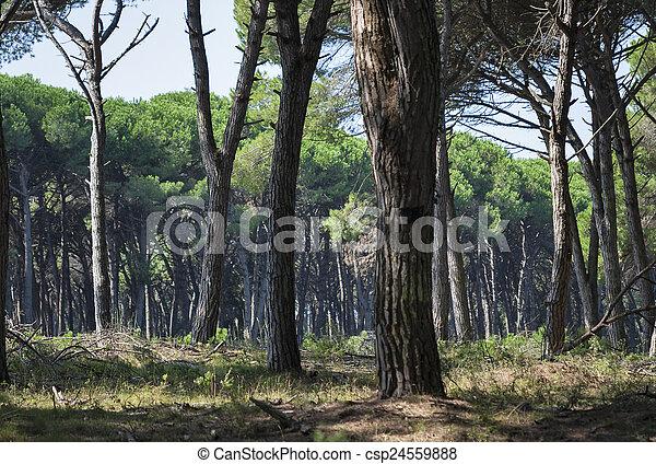 Tuscany forest landscape