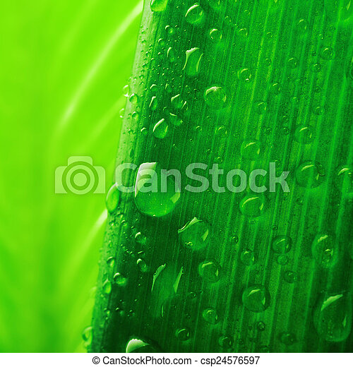 fresh green plant leaf with water drops