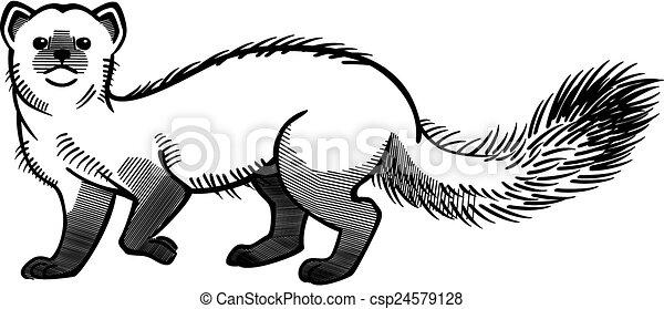 Illustration vecteur de martre vecteur ligne dessin - Dessin de belette ...