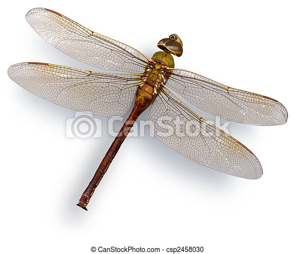 Green dragon fly (Green Darner) - csp2458030