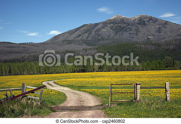 Country Roads Montana Countryside Yellow Flower Farm in front of Mountain Near Glacier National Park Montana - csp2460802
