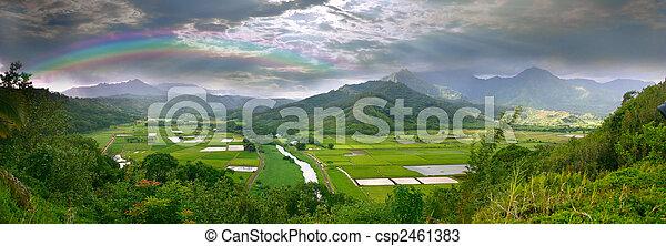 campos, taro, hawai, kauai, panorama - csp2461383