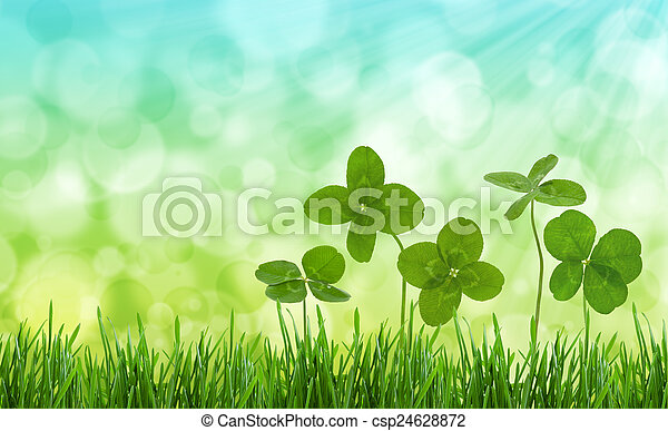 Close-up shot of four-leaf clovers in a field. - csp24628872