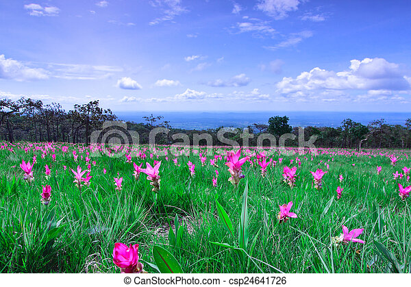 Heaven of the ground, field of Kra-Jeaw, Thailand