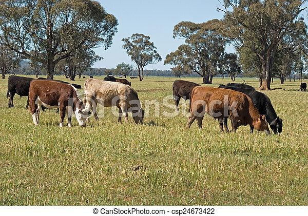 哺乳動物 - csp24673422