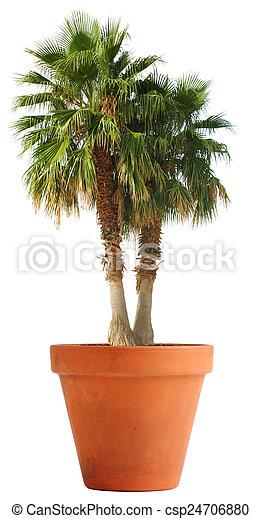 images de paume arbre dans a argile pot sud mers sentiment csp24706880. Black Bedroom Furniture Sets. Home Design Ideas