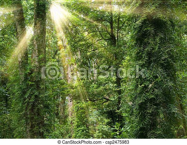sunshine in rain forest - csp2475983