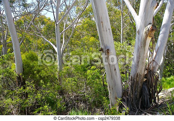 Australian native bushland