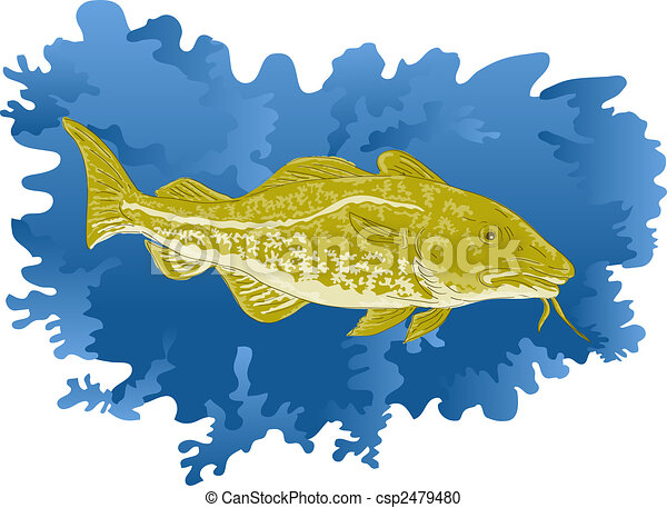 Atlantic cod fish - csp2479480