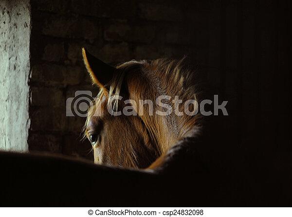 horse bend