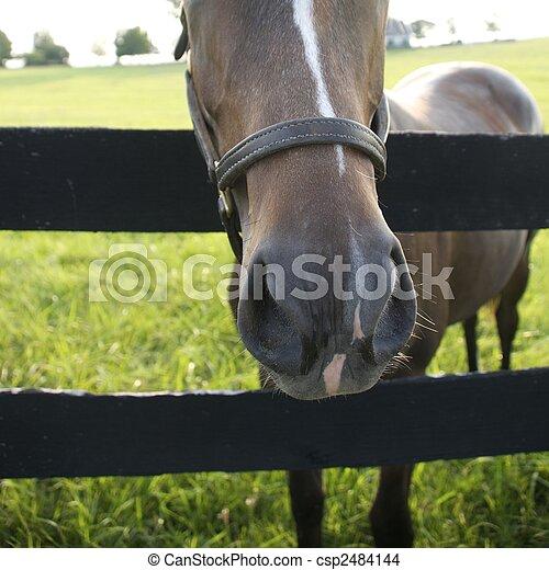 Kentucky Thoroughbreds - csp2484144