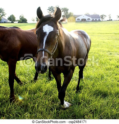 Kentucky Thoroughbreds - csp2484171