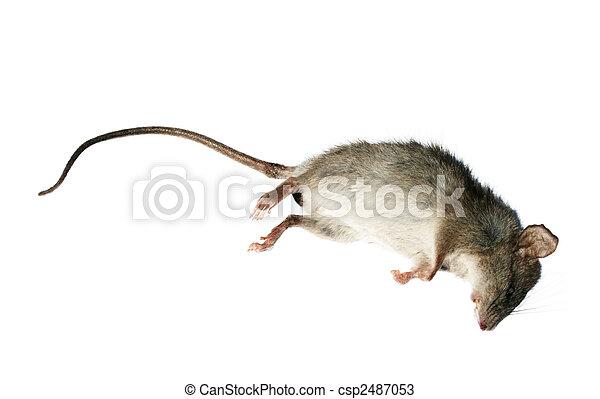 Dead rat - csp2487053