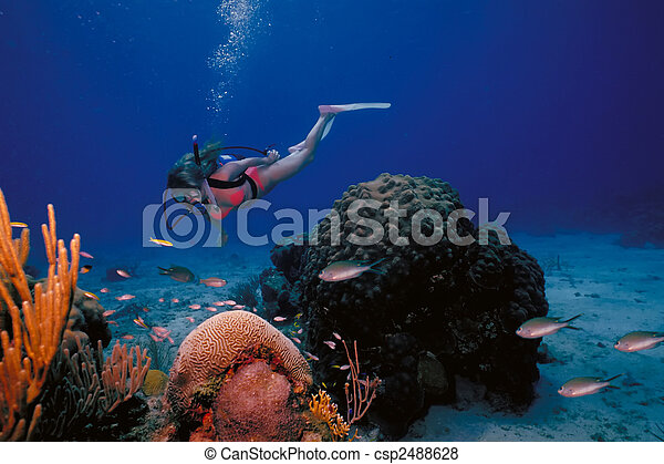 A scuba diving girl in a bikini poses above the coral reef in the warm waters at St. Croix Island in US Virgin Islands. - csp2488628