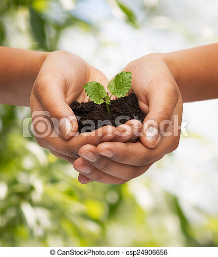 土壌, 植物, 女性の保有物, 手 - csp24906656