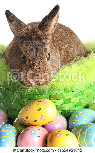 Easter bunny - csp24951045