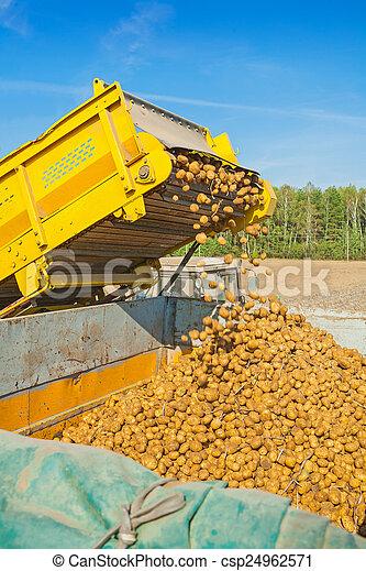Image de loadding pomme terre r colte csp24962571 recherchez des photographies des photos - Pomme de terre recolte ...