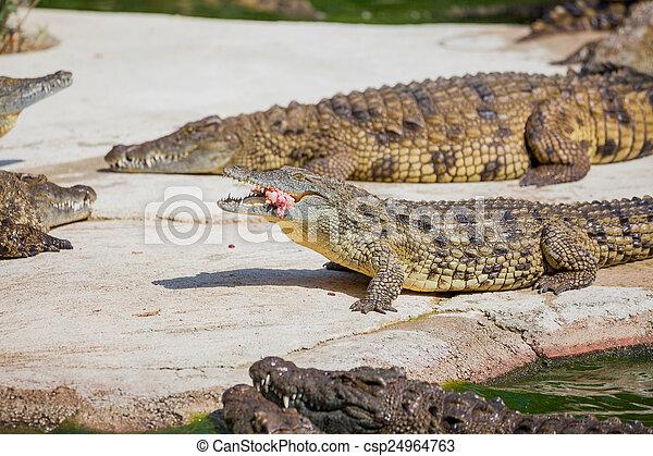 Archivi immagini di coccodrilli in fattoria closeup for Piani di fattoria stonegate