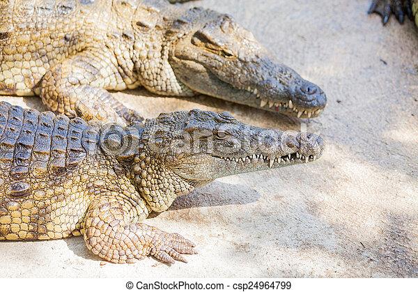 Archivi fotografici di coccodrilli in fattoria for Piani di fattoria stonegate
