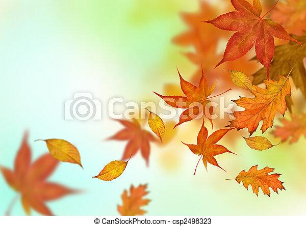 otoño, hojas, Caer - csp2498323