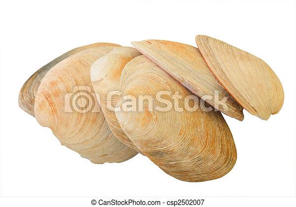 Aquatic Mollusk Shells - csp2502007