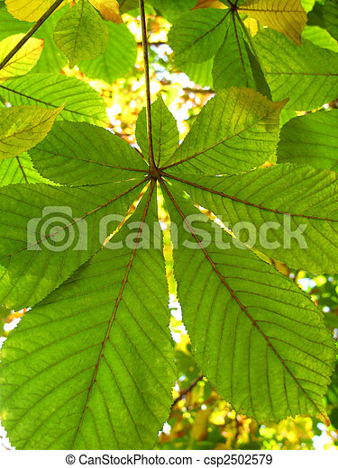 autumn leaves of a chestnut - csp2502579